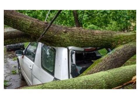 Pickering Tree Service